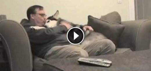 dog hug his owner