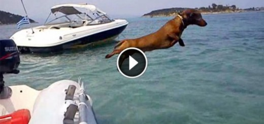hilarious dachshunds holiday