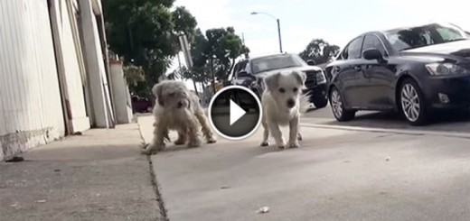Inseparable Stray Dogs Are Rescued Off Of The Streets