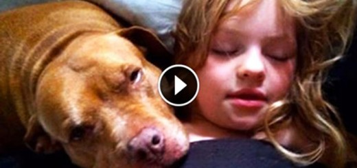 Rescued Pit Bull Protects 6-Year-Old Girl With Severe Autism