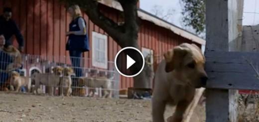 Cute Little Dog Keeps Running Away From Home