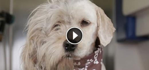 Homeless Dog Gets A Makeover