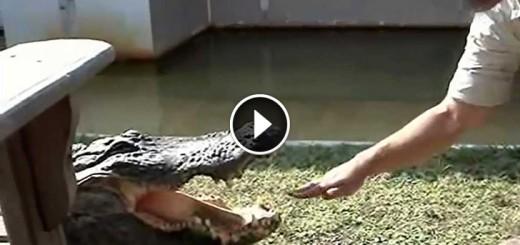 crocodile tease