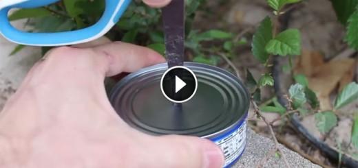 tuna torch
