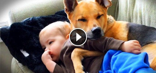 Adorable Dog Watches Over Little Human
