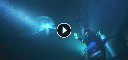 No One Knew What To Expect When They Saw This Dolphin