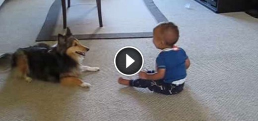 Cute baby dog playing
