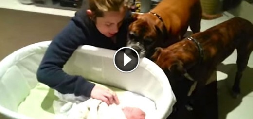 Dogs meet baby