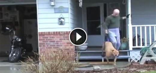Paraplegic dog walk
