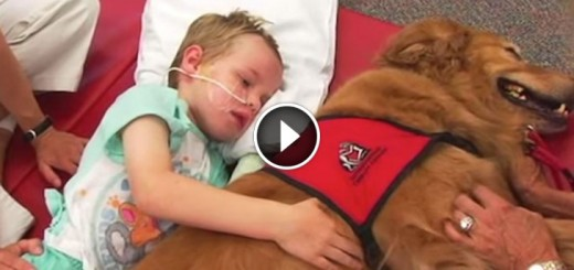 caleb story therapy dog