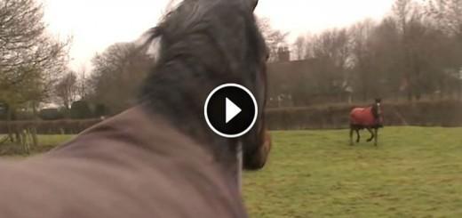 horses reunite