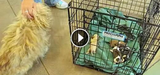 mom dog reunited tiny babies