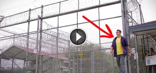 pedigree prison out