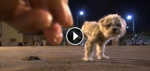 dog three legs rescued