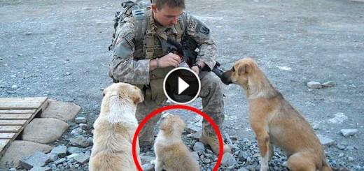 hero-dog1