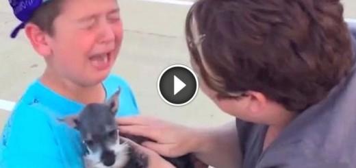 little boy new puppy reaction