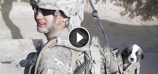soldier reunites with puppy