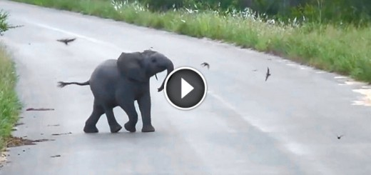 baby elephant play birds