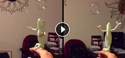 chameleon pet bubble