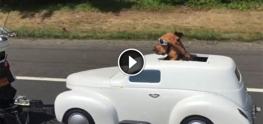 dog-ride