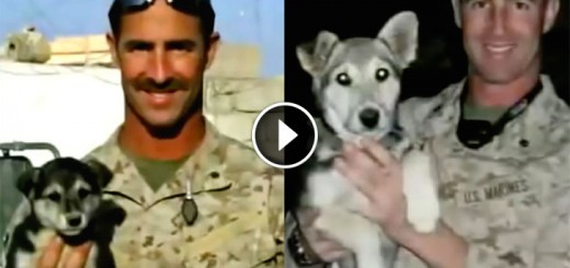 marine leave pup behind
