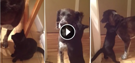 jasper cat misses dog