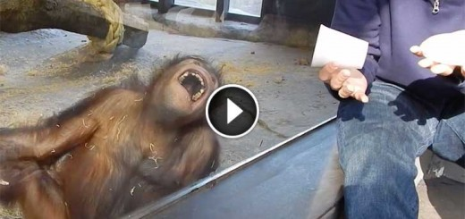 magic-trick-monkey
