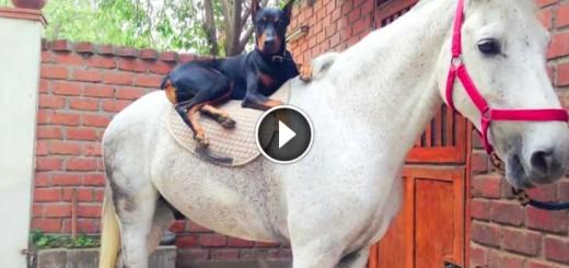 dog horse