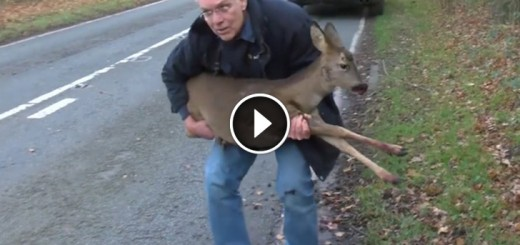 injured deer rescue