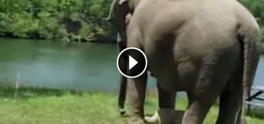 elephant waits dog friend