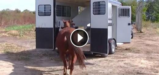 horses got second chance