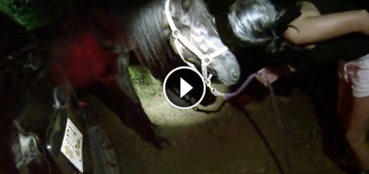 senior horse saved