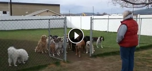 16dogs