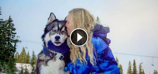 husky owner save relationship