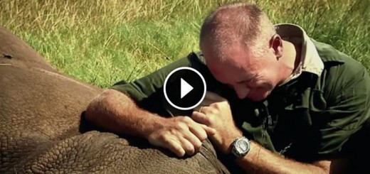 rhino-miracle