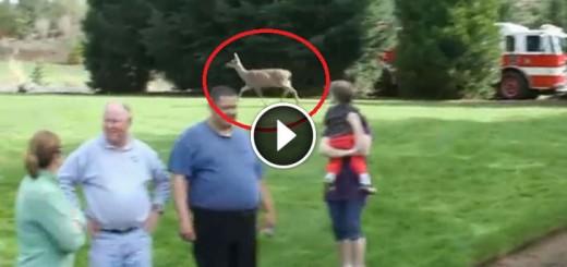 fawn-rescue