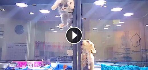 puppy kitten pet store