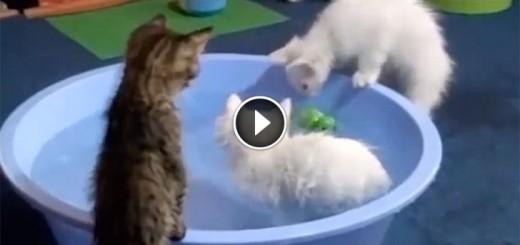cats bath