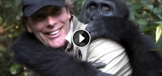 man reunite gorilla