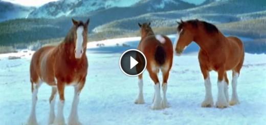 horse-snowball