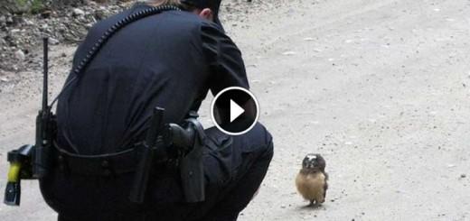 owl-and-deputy