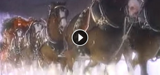 clydesdales-christmas