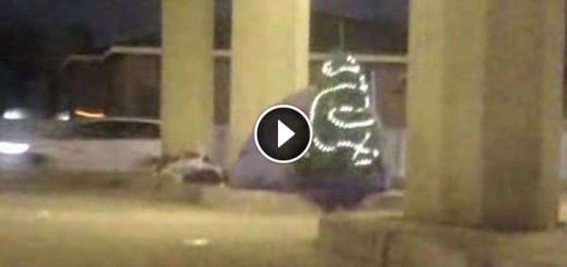 homeless-tree