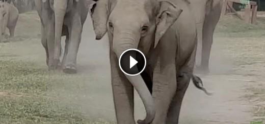 elephant-tractor