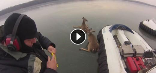deer-hovercraft-rescue