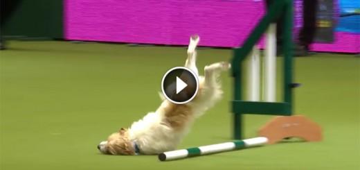 dog-show-fail