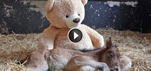 Image result for Baby Horse Was Abandoned By Mom, So They Put Teddy Bear In His Stable. Now Watch What He Does